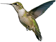 colibri-automatismes